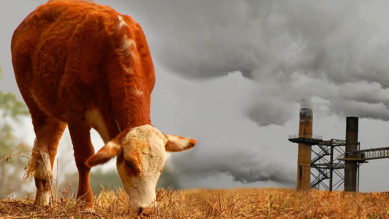 bovino inquinamento